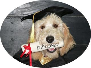 Dog Training Halifax Unleashed Pawsabilities References